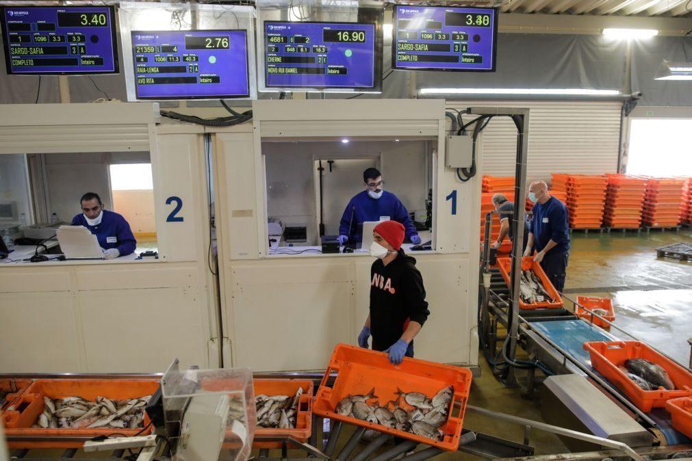 Docapesca investe 908 mil euros nos portos de pesca de Esposende e Vila do Conde