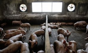 China emite plano para atingir autossuficiência na produção de carne de porco