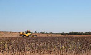 Seca leva agricultores do Alentejo a procurarem mais depósitos de água para o gado