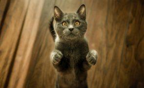 Onda de morte de gatos no Reino Unido pode estar ligada a ração. Marca é vendida em Portugal