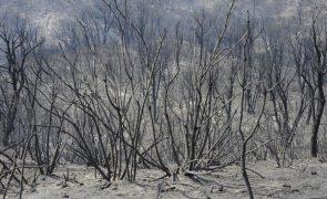 Incêndios não dão tréguas no sul de Itália e 11 mil hectares já arderam na Calábria