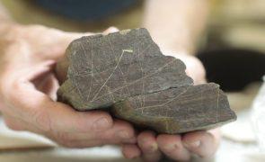 Arqueólogos do Côa intrigados com cerva gravada por incisão