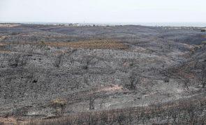Incêndio de Castro Marim. 14 animais carbonizados e 6.700 hectares afetados