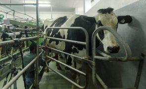 Produtores de leite querem atualização do preço fixado há 20 anos -- APROLEP