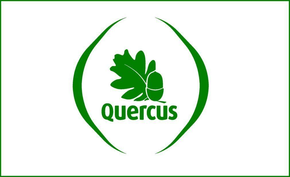 Quercus diz que viveiros nacionais produzem eucaliptos para plantações ilegais