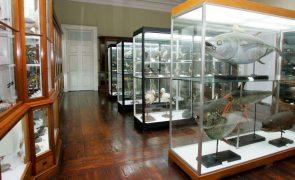 Museu de História Natural do Funchal reabre após obras no valor de 1,1 ME