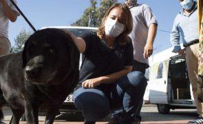 BE quer financiamento da escola de cães-guia para cegos revisto pela segurança social