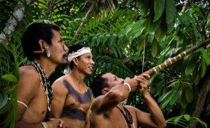 Reservas indígenas foram as áreas menos devastadas do Brasil em 36 anos