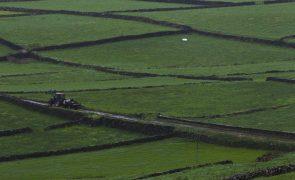 Covid-19: Bruxelas aprova ajuda de Estado de 10 ME para agricultores açorianos