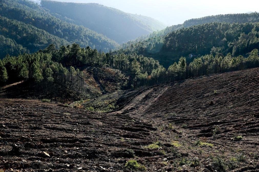 BE requere adiamento potestativo dos projetos de lei sobre entidades de gestão florestal