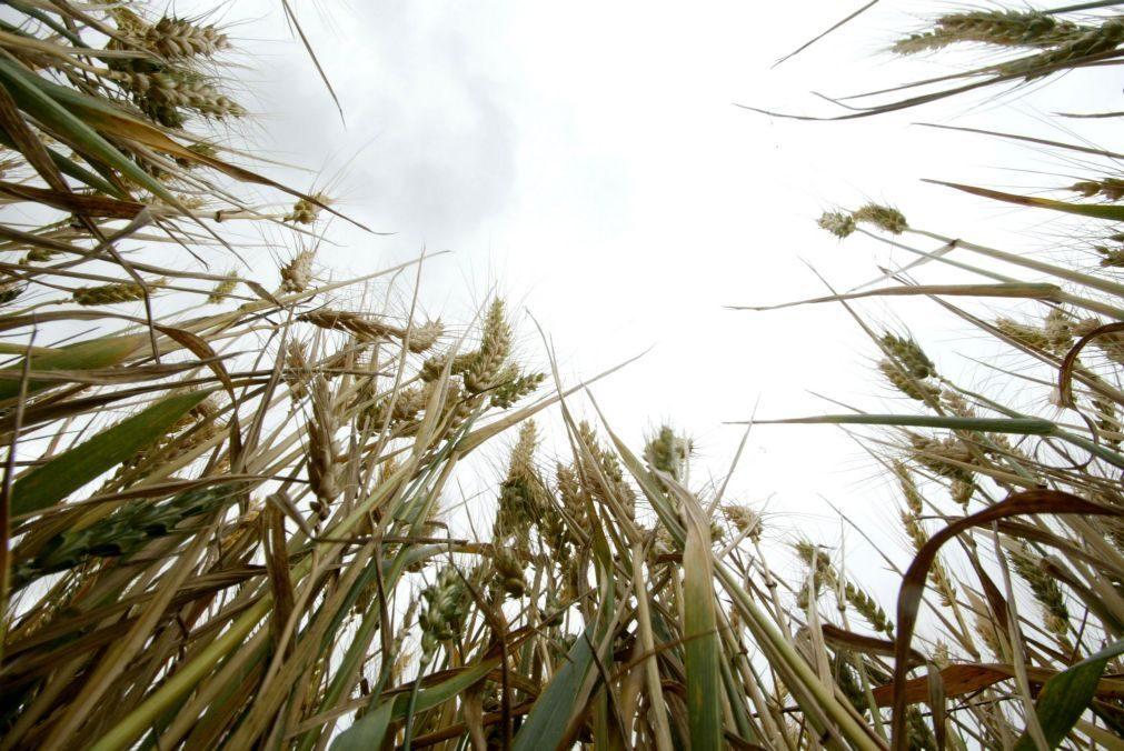 União Europeia aprova antecipação de ajudas aos agricultores dos Açores