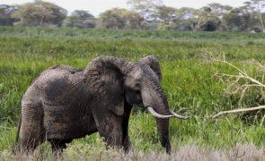 Covid-19: Pandemia ameaça décadas de esforços da conservação da vida natural em África - ONG