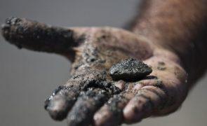 Apreendidas nove toneladas de bivalves no concelho de Olhão