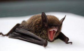 Covid-19: Cientistas de Wuhan queriam infetar morcegos em 2018, revela relatório