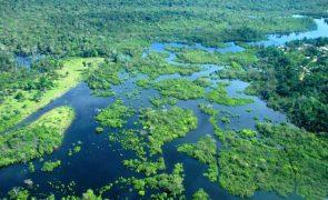 Uma revolução sustentável tenta irromper na Amazónia brasileira