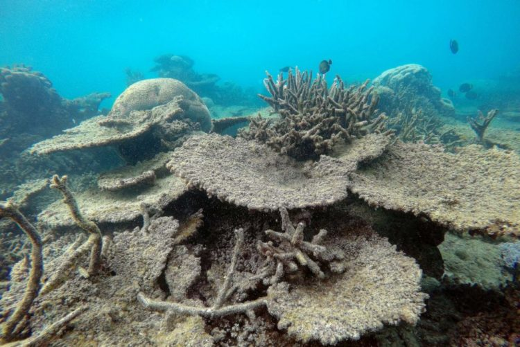 Mais de 70% do maior recife de coral do Japão morreu em 2016