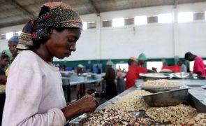 Moçambique prevê comercialização de 160 mil toneladas de castanha de caju