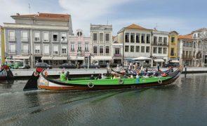 Foca-cinzenta avistada na ria de Aveiro