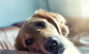 Mata cão da companheira para vingar queixa por violência doméstica