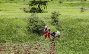 Cabo Verde com ano agrícola próximo do normal ainda espera mais chuvas em outubro