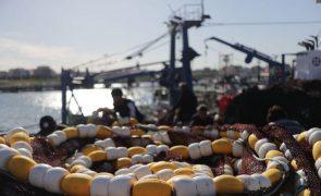 É preciso reduzir pesca da sarda, arenque e verdinho no Atlântico Nordeste, alerta organização