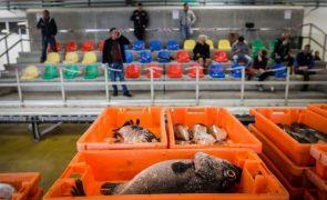 Valor do pescado transacionado em Portugal Continental sobe 22,7% para 182 ME até setembro