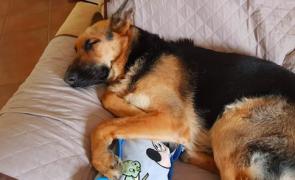 Pai dá 5 mil euros a quem descobrir quem matou a cadela da filha autista