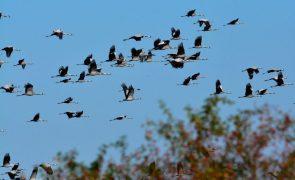 Uma em cada cinco espécies de aves da Europa está ameaçada de extinção