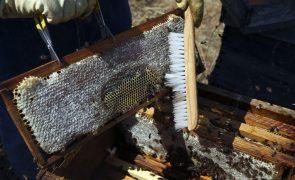 Clima incerto e vespa asiática ameaçam produção de mel na região Centro