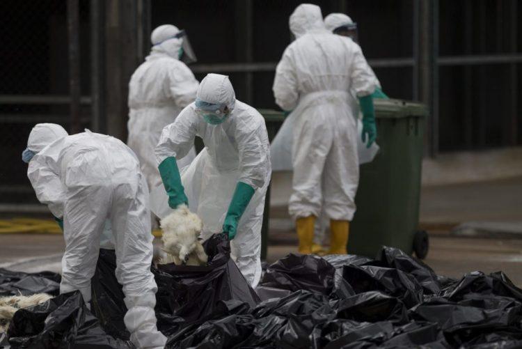 Macau regista primeiro caso importado de infeção humana com vírus H7N9 este ano