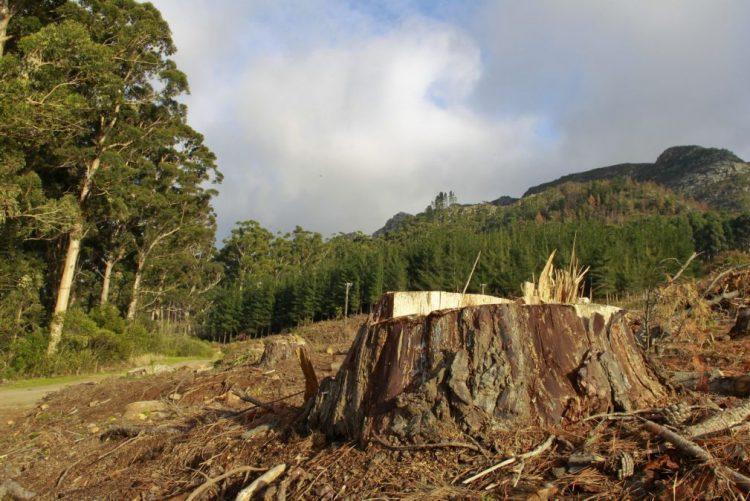 Autoridades moçambicanas realizam maior apreensão de madeira de sempre